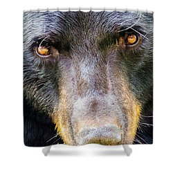 Nosy Bear Shower Curtain