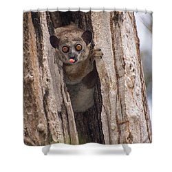 Shower Curtain featuring the photograph Nyah by Alex Lapidus
