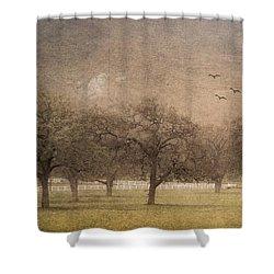 Oak Trees In Fog Shower Curtain