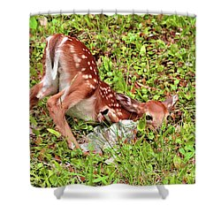 Shower Curtain featuring the photograph Oh Deer by Debbie Stahre