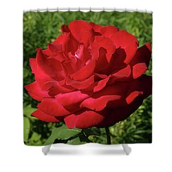 Oh The Blood Red Rose Shower Curtain