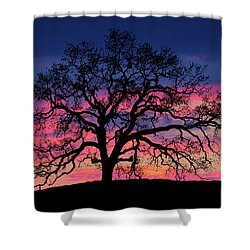Shower Curtain featuring the photograph Old Oak Sunset by John Rodrigues