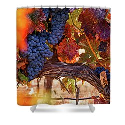 On The Vine Shower Curtain