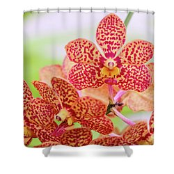 Orange Spotted Orchids Shower Curtain