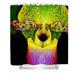 Orchid Study One Shower Curtain