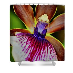 Orchid Study Two Shower Curtain
