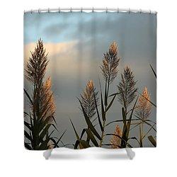 Ornamental Pampas Grass Shower Curtain
