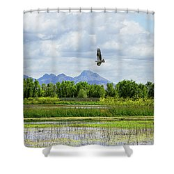 Osprey Over The Wetlands Shower Curtain