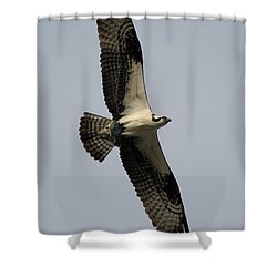 Osprey With Fish Shower Curtain