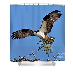 Osprey With Nesting Materials Shower Curtain