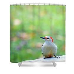 Shower Curtain featuring the photograph Our First Red-bellied by Onyonet  Photo Studios