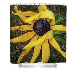 Shower Curtain featuring the photograph Out Of The Ordinary by Dale Kincaid