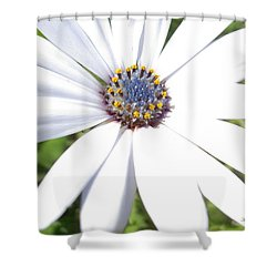 Page 13 From The Book, Peace In The Present Moment. Daisy Brilliance Shower Curtain