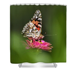 Shower Curtain featuring the photograph Painted Lady Butterfly At Rest by Christina Rollo