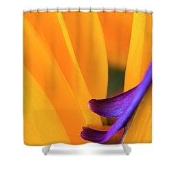 Paradise Bird Shower Curtain