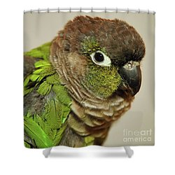 Shower Curtain featuring the photograph Parker by Debbie Stahre