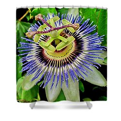 Passion Flower Bee Delight Shower Curtain