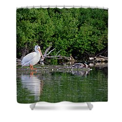 Pelican And Friends Shower Curtain
