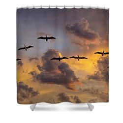 Shower Curtain featuring the photograph Pelicans In The Clouds by John Rodrigues