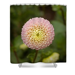 Petite Pink Shower Curtain