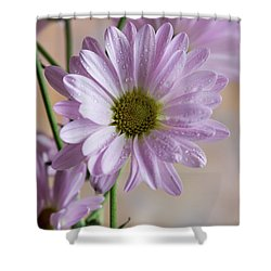 Pink Daisies-5 Shower Curtain
