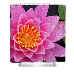 Pink Petals In The Rain  Shower Curtain