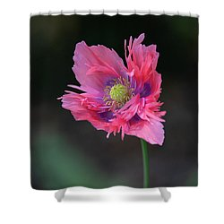 Shower Curtain featuring the photograph Pink Poppy by Dale Kincaid
