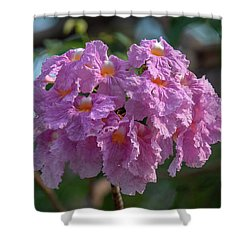 Shower Curtain featuring the photograph Pink Trumpet Tree, Rosy Trumpet Tree Or Pink Poui Dthn0257 by Gerry Gantt