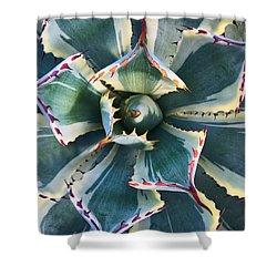 Pinwheel Succulent Shower Curtain