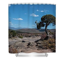 Pinyon Pine With North Rim In Background Black Canyon Of The Gunnison Shower Curtain
