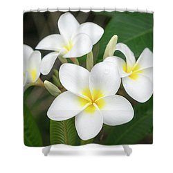 Pleasing Plumeria Shower Curtain