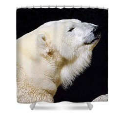 Shower Curtain featuring the photograph Polar Bear by Dan Miller