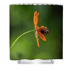 Shower Curtain featuring the photograph Pollinating The Cosmos by Dale Kincaid