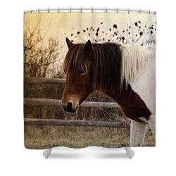 Pony Warm Up Shower Curtain