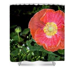 Poppy Shower Curtain