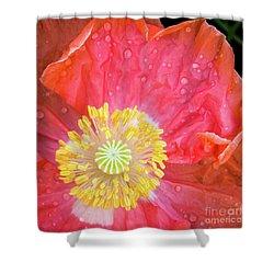 Poppy Closeup Shower Curtain