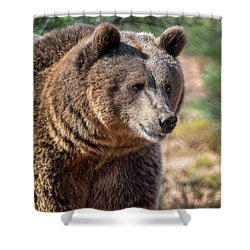 Portrait Of A Female Grizzly Bear Shower Curtain