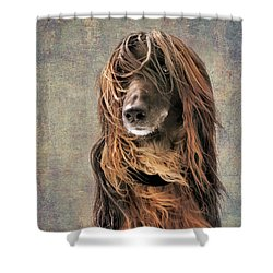 Portrait Of An Afghan Hound Shower Curtain