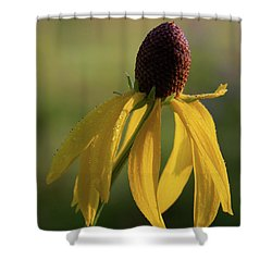 Shower Curtain featuring the photograph Prairie Coneflower by Dale Kincaid