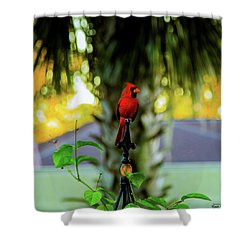 Proud Male Cardinal Shower Curtain