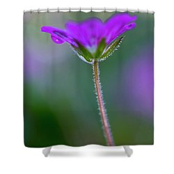 Shower Curtain featuring the photograph Purple Flower by John Rodrigues