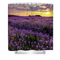Purple Sea Shower Curtain