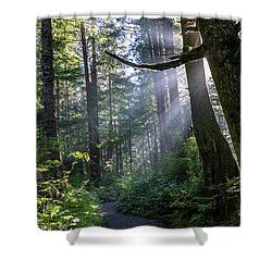 Shower Curtain featuring the photograph Rain Forest At La Push by Ed Clark