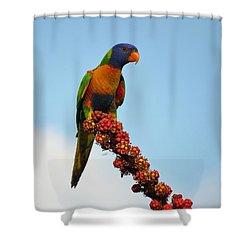 Rainbow Lorikeet Umbrella Tree Flowers Shower Curtain