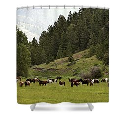 Ranch Horses At Pasture Shower Curtain