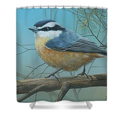 Red Brested Nuthatch Shower Curtain