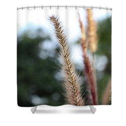 Red Grass - Pennisetum Setaceum 'rubrum' Shower Curtain