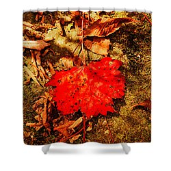 Red Leaf On Mossy Rock Shower Curtain