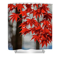 Shower Curtain featuring the photograph Red Leaves by Cindy Lark Hartman