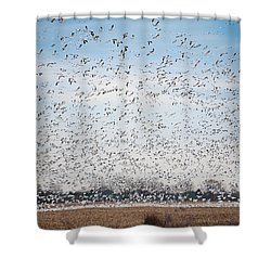 Resting On The Flyway Shower Curtain